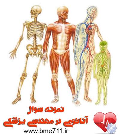 نمونه سوال آناتومی در مهندسی پزشکی